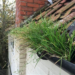 If gutters are left for too long weeds will start to grow or in this case a meadow