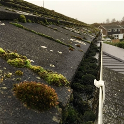 The moss invasion and a problem for gutters