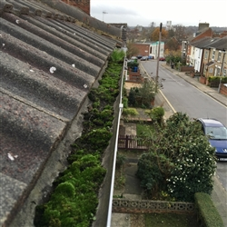 Gutter filled with moss before cleaning, Ipswich Suffolk